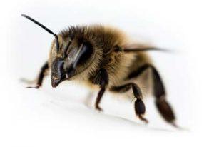 meeting-page-single-bee